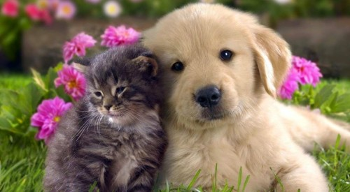 cat-and-dog-hd-wallpaper-1024x56433d71.jpg