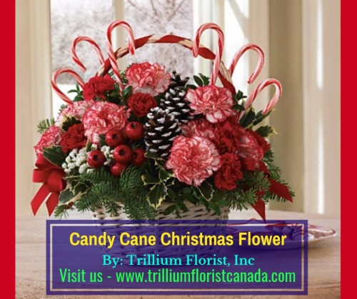 Candy-Cane-Christmas-Flower-by-Trillium-Florist-Inc1aa06ec16358577c.jpg