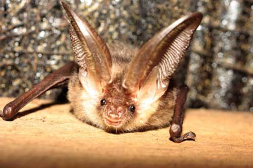 These bat surveys are only initiated when bats are active (April – September). Where there is potential for a maternity perch, surveys must be attempted among May and early August. . See More;-https://www.earthenvironmental.co.uk/bat-surveys/