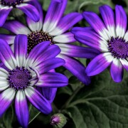 100-Amazing-Mixed-Wallpapers-Pack--223-7207298d971c1dd0d8