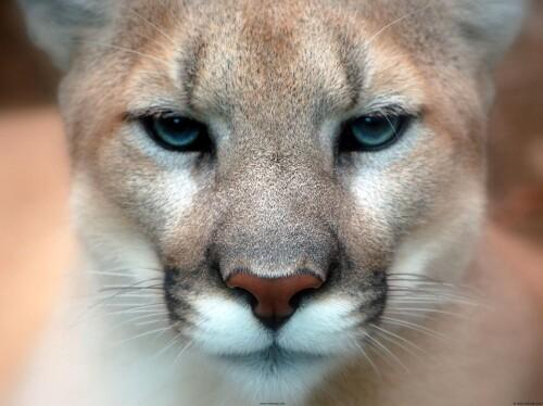 Mac-OS-X-Puma-That-Looke31fa151ff9f64b6.jpg
